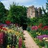 """Шотландский бал """"Цветущий сад"""""""