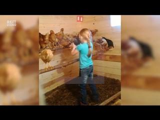 Мать сняла на видео семилетнюю дочку, обучающую куриц математике
