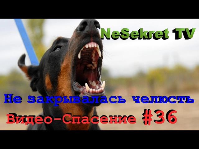Собака Не Могла Закрыть Челюсть, Но Никто Не Знал Почему. Спасение Животных В Улан-Удэ, Россия