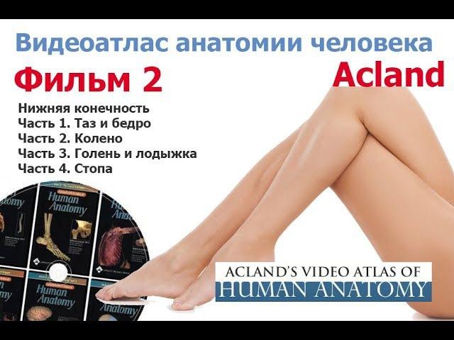 Фильм 2 целиком Анатомия нижних конечностей Атлас Акланда