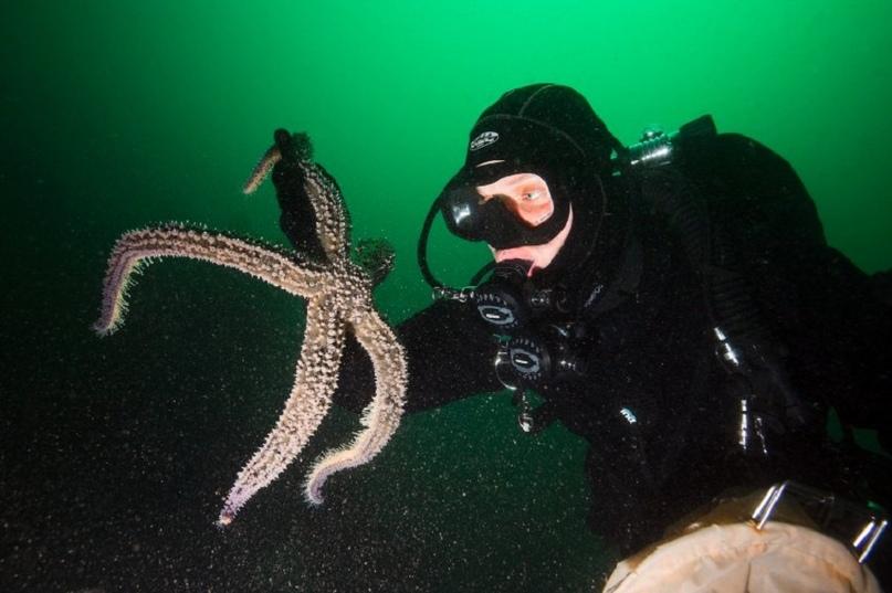 Подводный мир у берегов Шотландии