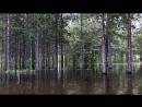 в темно синем лесу