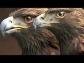 'Кто Вы Орел или утка'
