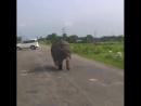 Носороги среди нас El rinoceronte entre nosotros