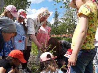 Маленькие серовчане высадили три елочки на территории 27 школы!
