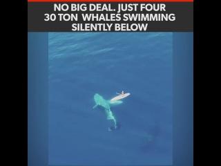 Ничего особенно, это просто 4 четыре 30-ти тонные кита плавают себе неподалёку