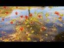 HD Footage Футаж Фон для видеомонтажа Осень разноцветная появилась в городе