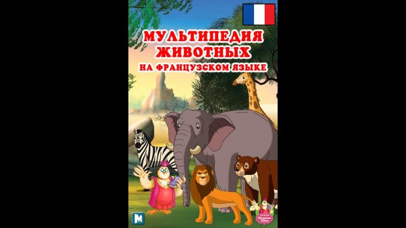 Мультипедия животных на французском языке La lettre F - le Flamant rose