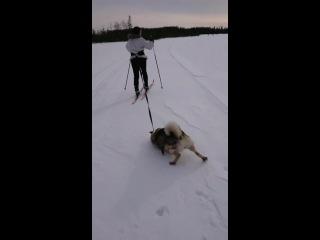 У меня лапки: норвежское видео с ленивым псом стало вирусным - Видео - L!fe