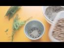 Тестирование ТРЕХ способов укоренения хвои на примере араукарии