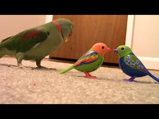 Real Bird's Reaction to Digibirds Part 2 · coub коуб