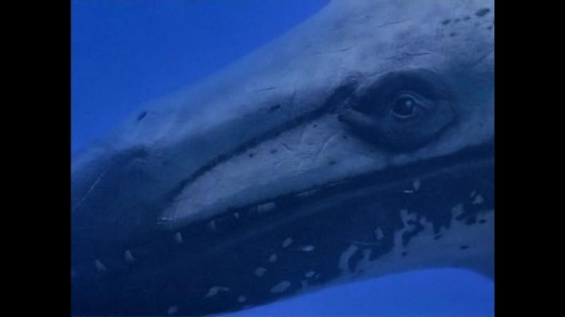 BBC Прогулки с Чудовищами Киты Убийцы BBC Walking with Beasts Killer Whales 2001
