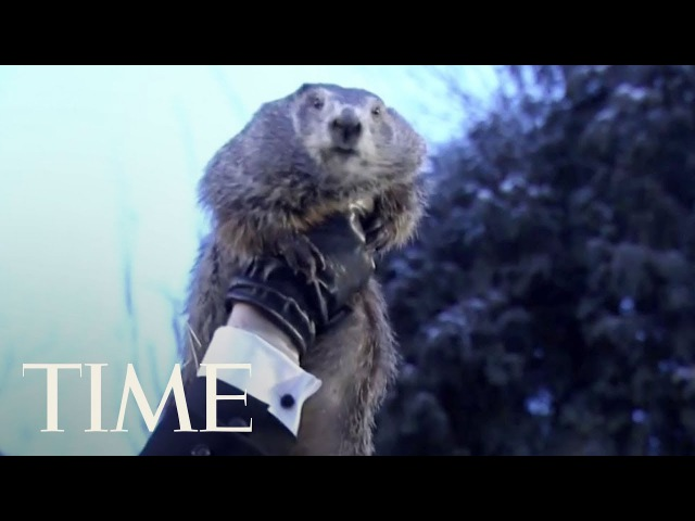 Groundhog Day 2018 Punxsutawney Phil Predicts Winter Is Sticking Around TIME