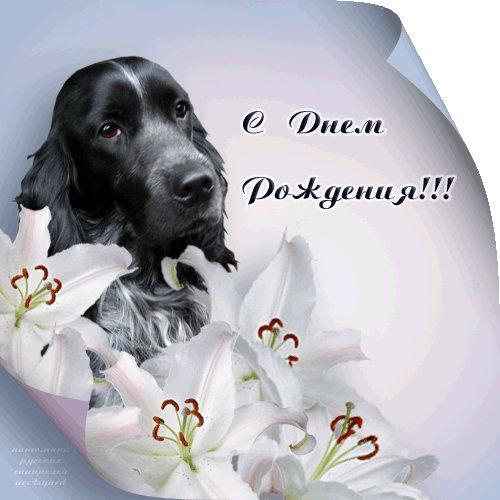 поздравления с днем рождения собаке не в стихах зависит ваших предпочтений