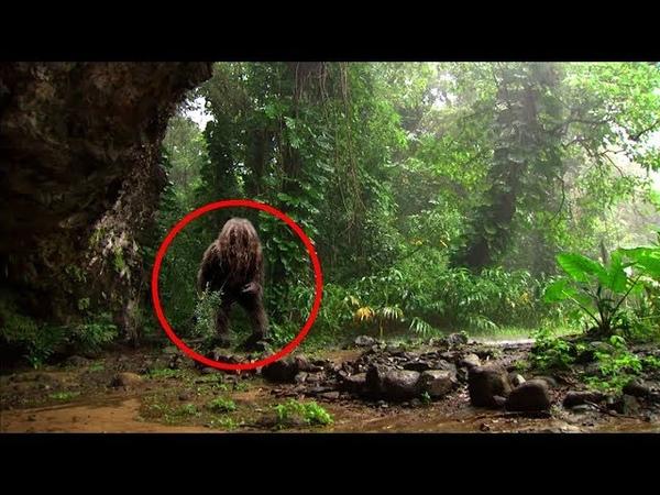 8 Geheimnisvolle Dinge die je im Dschungel gefunden wurden