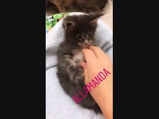 Девчушка моя любимая Алламанда