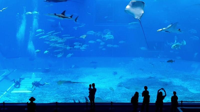 Okinawa Churaumi Aquarium 2018 August