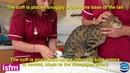 Осциллометрический метод измерения артериального давления у кошки Blood pressure measurement in the cat: use of HDO (high definition Oscillometry) Equipment
