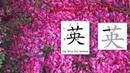 Chinese Radical 005 艹 草字头 Grass, Chinese Radical is similar to English Latin root words.