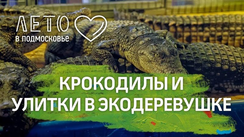 Лето в Подмосковье - Покормить крокодилов и попробовать улиток в Экодеревушке в Парфеньтево