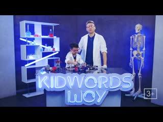 Премьера! kidwords шоу! самые крутые тесты игрушек!