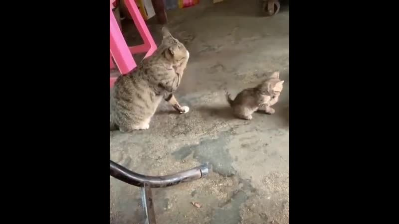 Animals_videoo_B1s65TynujL.mp4