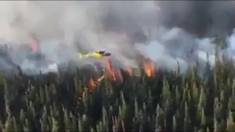 Встречный пал-способ тушения лесных и степных пожаров
