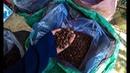 Самый дорогой кофе в мире   Kopi luwak   Black ivory   Особенности производства