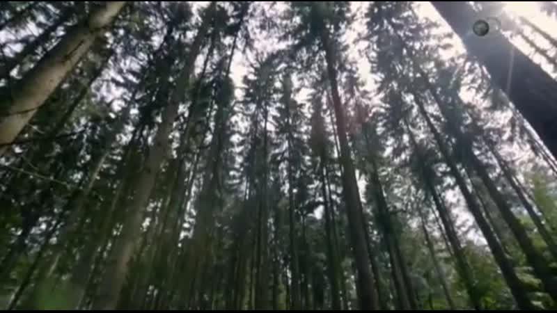Перуанская пустыня, Свастика из деревьев, Калифорнийский призрак. HD Загадки пла
