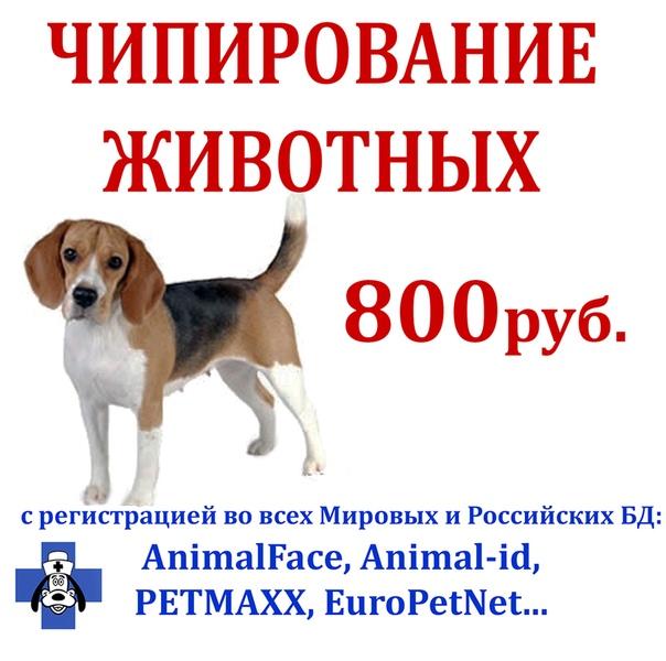 vk.com/market-117597111?w=product-117597111_928463%2Fquery