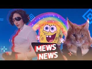 Mews News | Кот-экстремал, Мадонна и Яндекс