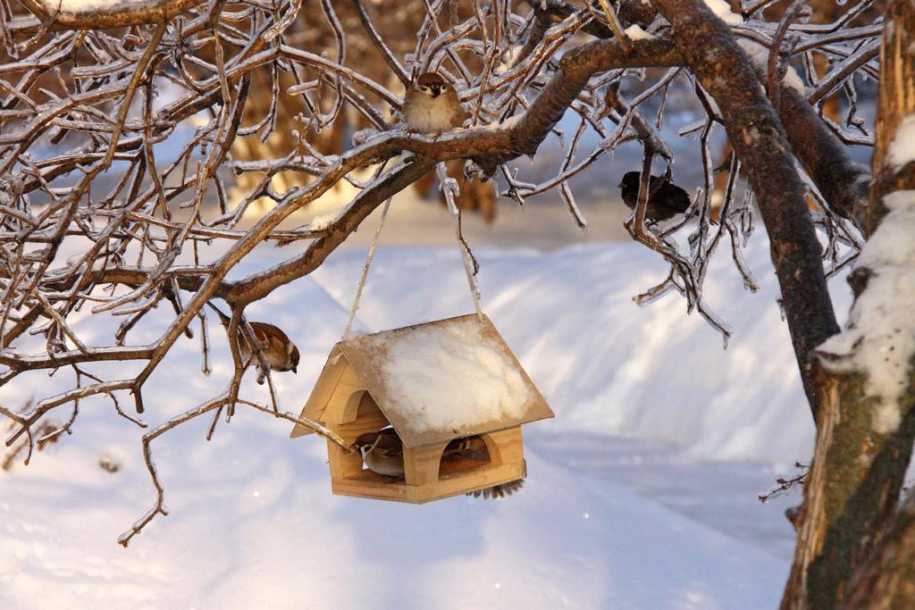 запросу картинки птицы с кормушками букв