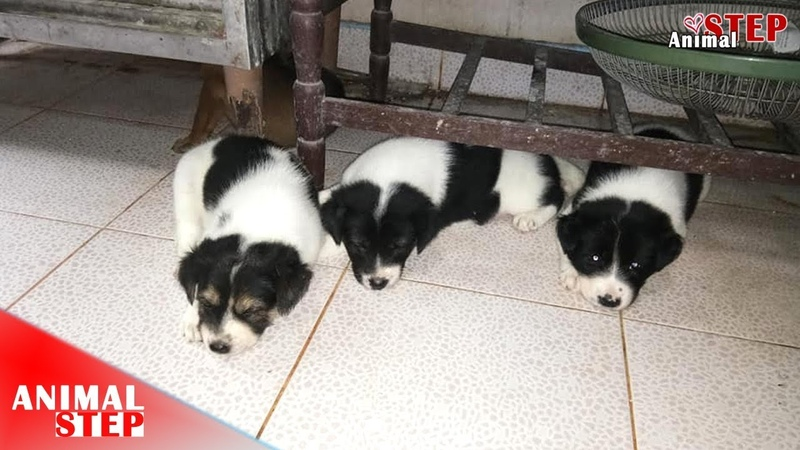 The Dog Family from No Home to where they will be Joyful