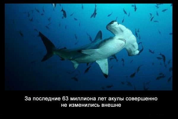 Valteya - Интересные факты о акулах / Хищники морей.(Видео. Фото) - Страница 2 L2FiwbOKVK4