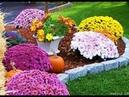 Отцвели хризантемы
