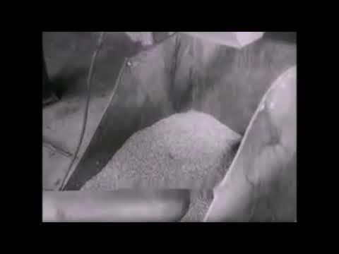 Выращивание конопли в ссср Эх Жили же люди