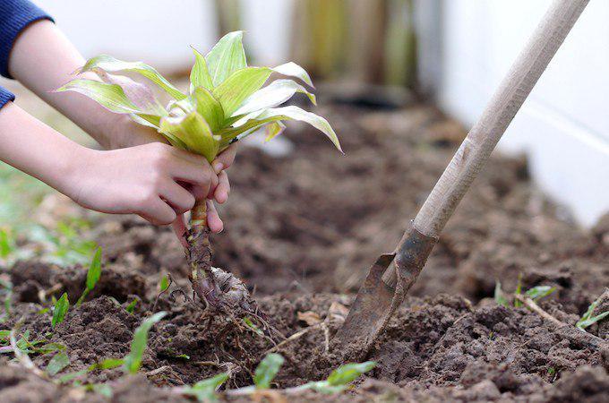 Участникам семейно-экологического проекта «Наше дерево» вручат сертификаты в парке «Кузьминки»