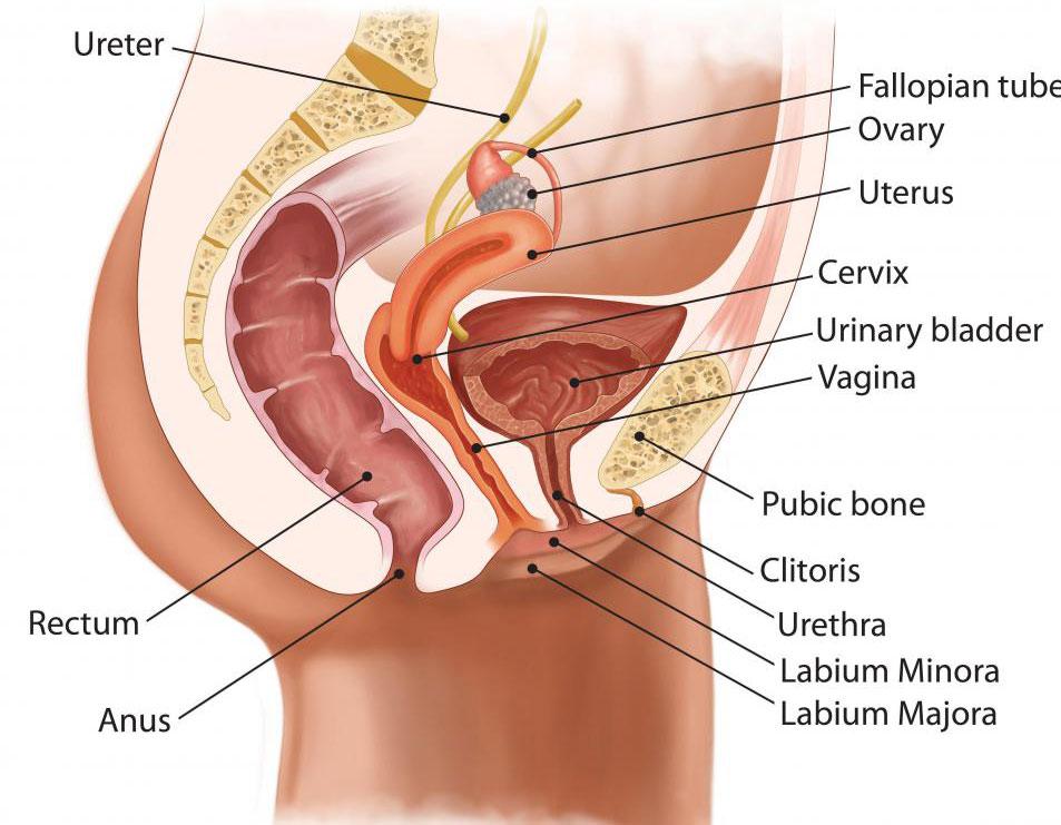 Аноскопия - это неудобная медицинская процедура, при которой инструмент вводится в задний проход, чтобы врач мог осмотреть его на наличие признаков заболевания.