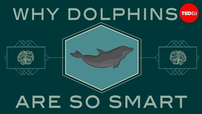 How smart are dolphins Lori Marino
