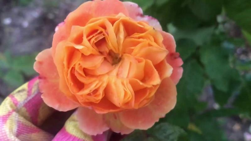Emilien Guillot Эмильен Гийо цветение перед зимой