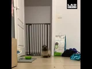 Что не так с моим котом