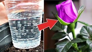 Для  домашних растений минералка это нечто! Все растения отблагодарят шикарным цветением!
