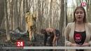 Новое возгорание леса на Долгоруковской яйле Огонь локализован
