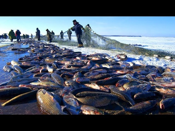 Amazing Net Fishing under Ice... Big Catch in the River, You Wont Believe That How Many Fish!