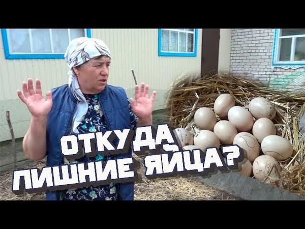 Конец весны Курица села на яйца Сажаем лук севок