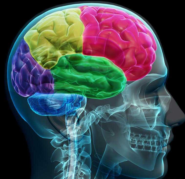 Нейропсихолог может помочь пациентам справиться с множеством связанных с мозгом дисфункций.