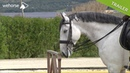 Working Equitation part 2 The Ease of Handling Trial step by step Pedro Torres