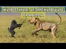 РАЗМЕР НЕ ИМЕЕТ ЗНАЧЕНИЯ Драка животных Видео смешные животные