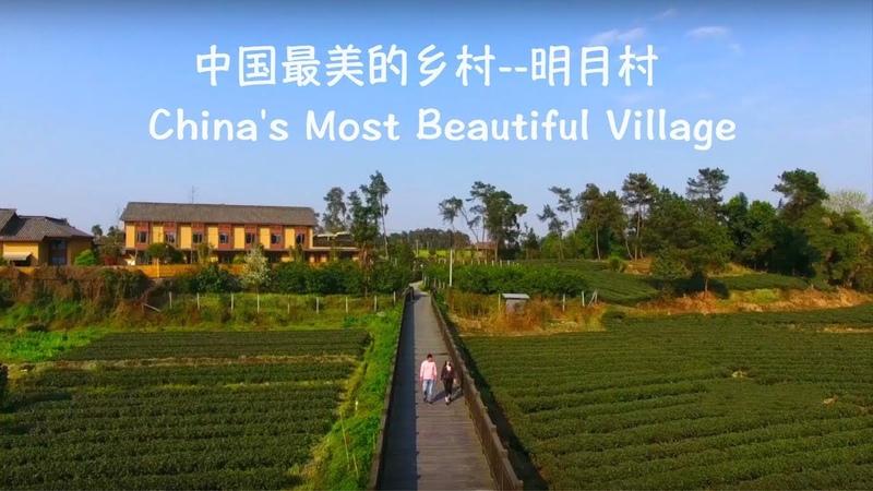 在中国最美的乡村过清明节,赏花,制茶和手作清明粑粑 Chengdu Plus