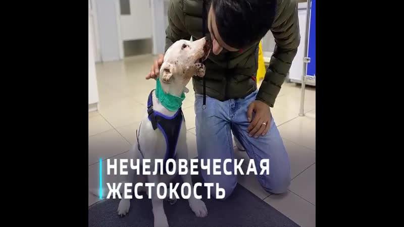 Живодёры покалечили щенка